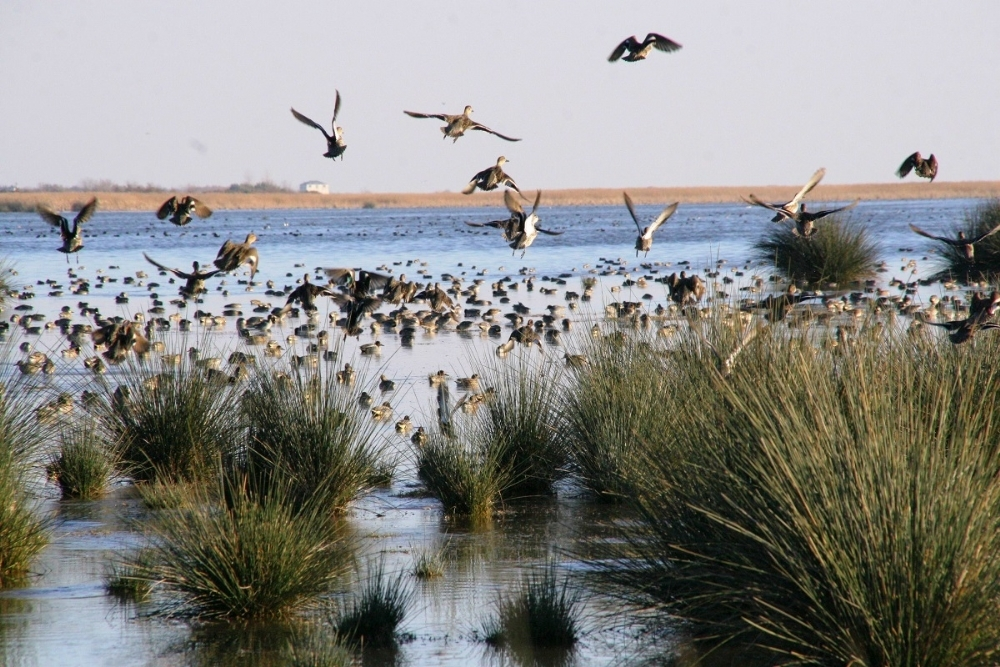 Kuş Cenneti - Turizm Haritası