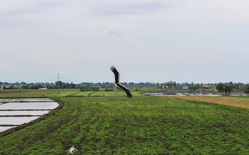 Kuş Gözlem Alanı